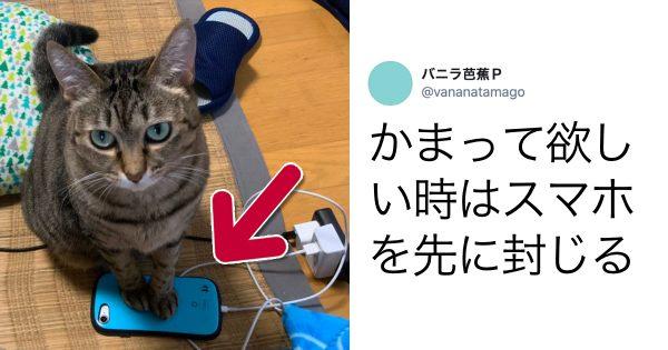 猫「あそべ」「なでろ」「かまって」 10選