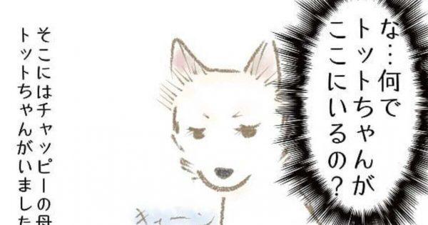 「離れて暮らす我が子」を指導しに来た母イヌの話にビックリ…!