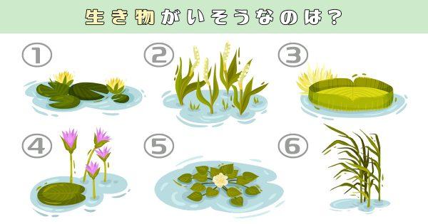 【心理テスト】あなたが「沼にハマりやすい性格」かわかります!