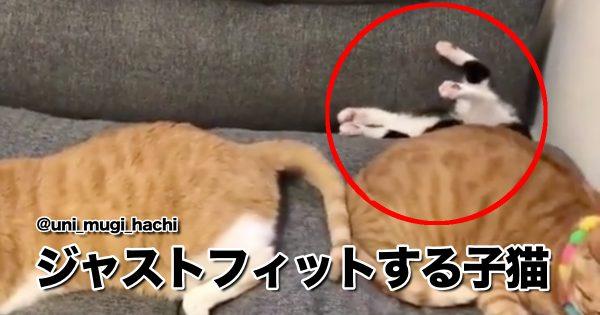 「ハマり猫」にハマっちゃいそう… 10選