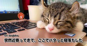 「寝落ち猫」の癒し効果とんでもねぇな… 10選