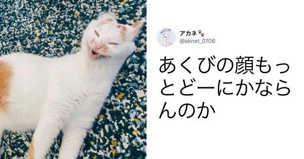 猫の「全力変顔」で笑わない人いるんかwww 10選