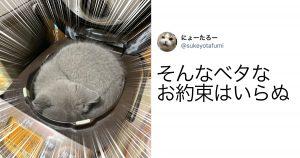 「猫×入れそうなもの」事件簿 10選