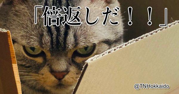 【ニャン沢直樹】表情豊かな猫の「喜怒哀楽」 8選