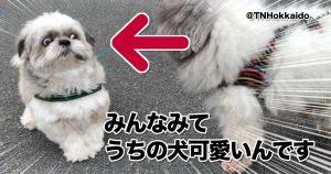 アフレコ余裕な「犬の顔」www 10選