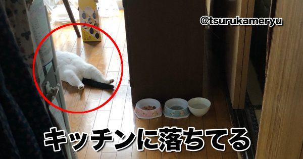 落ちてるネコ
