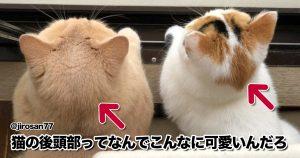 悶絶級にかわいい「猫のパーツ」を見て見て見て!! 10選