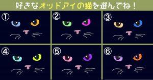 【心理テスト】オッドアイの猫が暴く、あなたの性格の「ミステリアス度」