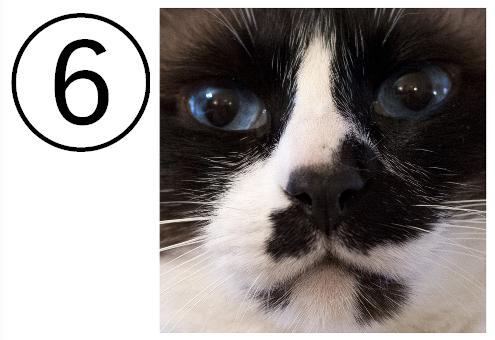 猫 心の折れやすさ 心理テスト