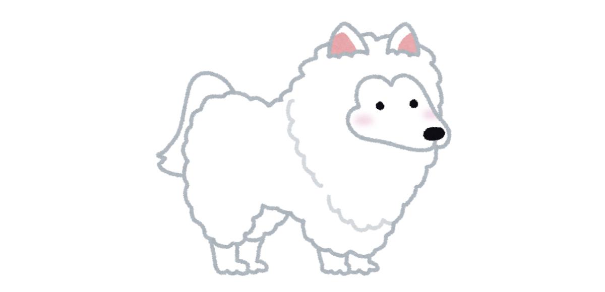 お祭り 屋台 食べ物 犬に例える 性格 スピッツ
