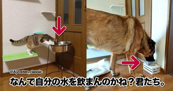 【犬と猫】最強コンビのほっこりする日常 8選
