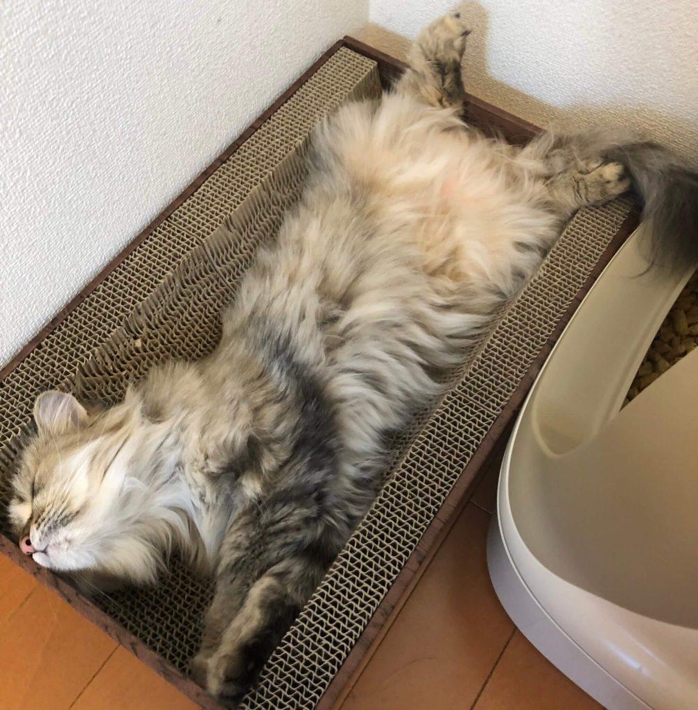 嫌なことがあった猫02