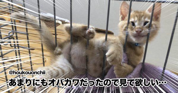夏バテ知らずな「おちゃめ猫」の暴れっぷりが最高w 10選