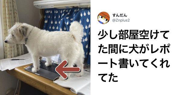 犬との生活