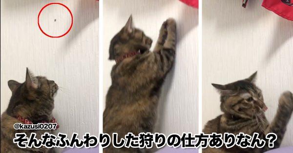 「うちの子、絶対ネコじゃない」 8選