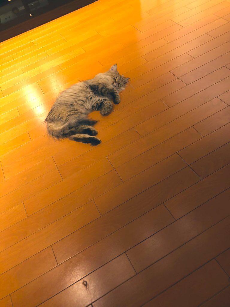 嫌なことがあった猫