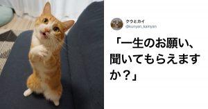 100%日本語しゃべってるだろ…「猫アフレコ」の職人技 9選