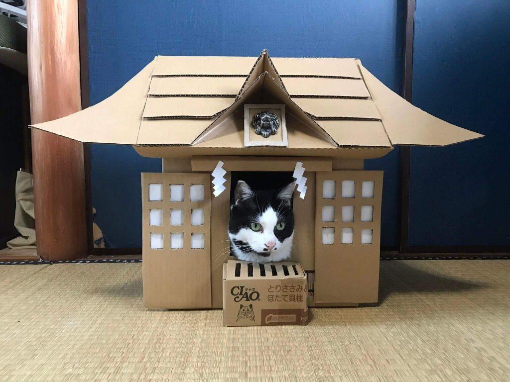 猫神社2-2