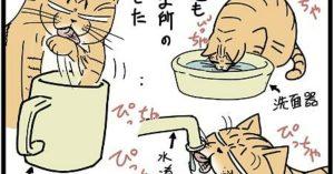 【ナゾの生態】ネコよ、何故そこの水を舐める…?
