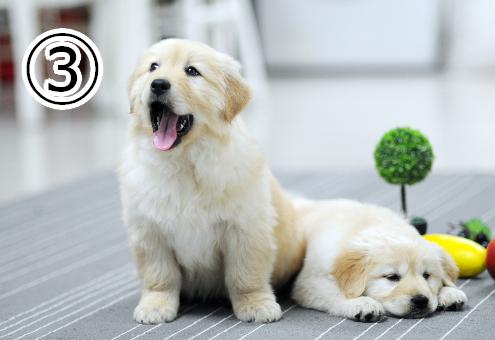 親友 関係性 犬 心理テスト
