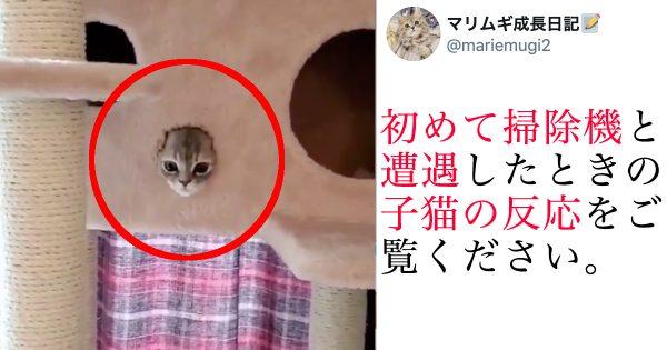 【速報】子猫氏、「はじめての掃除機」で衝撃の可愛さに