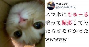 「ちゅーる目線」で猫を見れるアイデア動画が「可愛すぎ…」ネット悶絶!