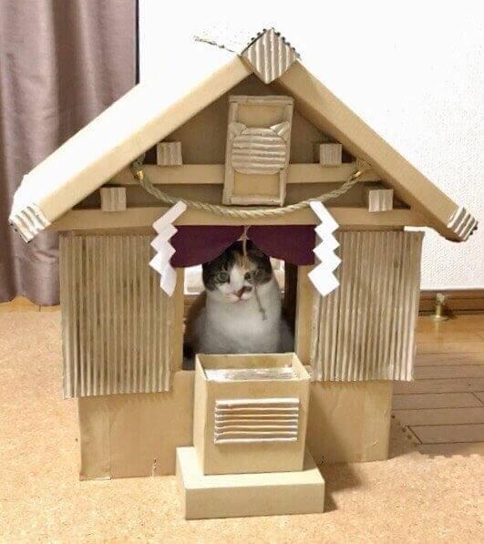 猫神社3-1