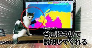 タイミングが神でした。「撮られたがり猫」 9選