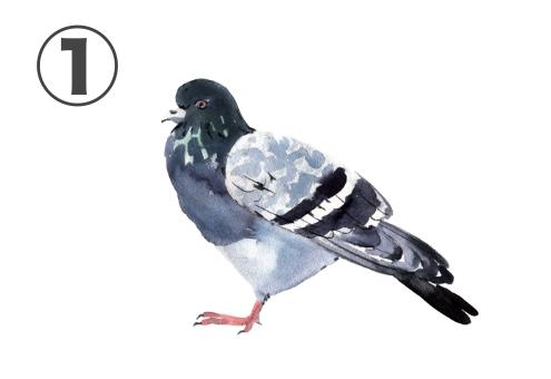 ハト 友達といる時 性格 心理テスト