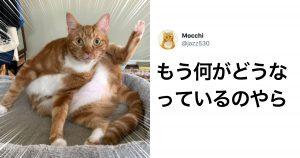 【衝撃】猫には骨がないらしい 8選