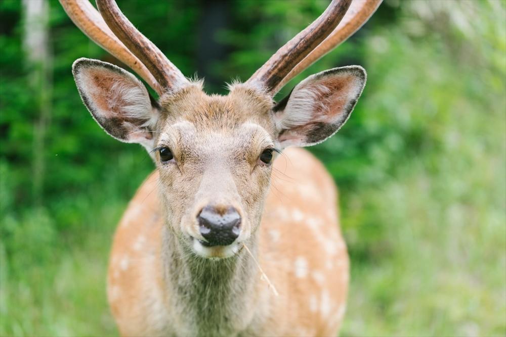 鹿さん_rr