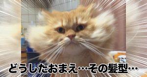 ネコの「百面相ぶり」って意外と知られてないよね 10選
