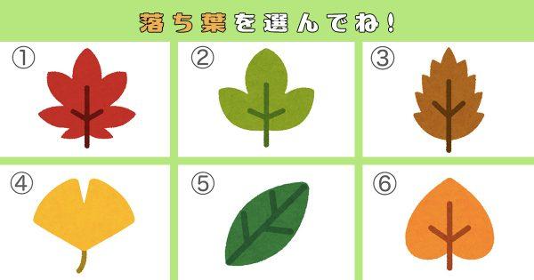 【心理テスト】あなたの「心のバリア」は何cmの厚み?落ち葉で性格を調べます