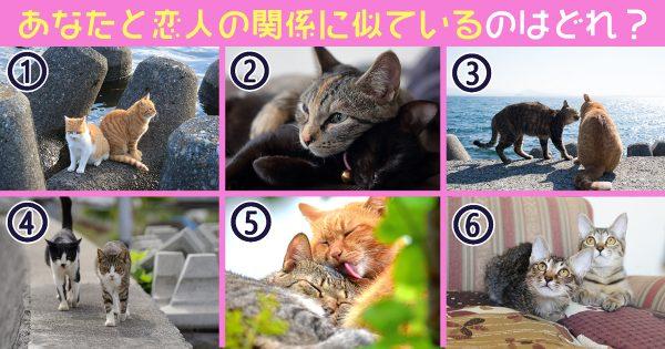 猫 恋人 長所 心理テスト