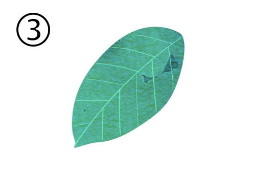 葉っぱ 新しもの好き 心理テスト