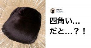 「黒猫」にしか出せない魅力が、わかる人にはわかるんです… 9選