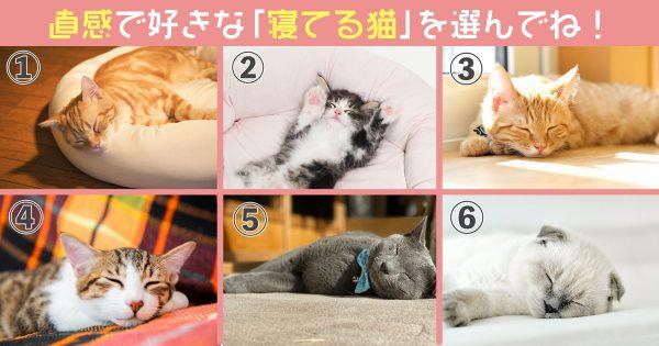 【心理テスト】あなたの「愛らしさレベル」を診断!眠り猫を選んでね