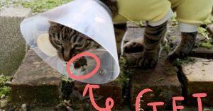 猫にエリザベスカラーは可哀想…?いやいや、こんなに便利に使ってますw