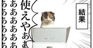 【あるある】猫用ベッドを買ってもムダになる理由…
