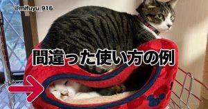 「猫との生活」が思い通りにいくと思ったら大間違いだぜ!! 8選