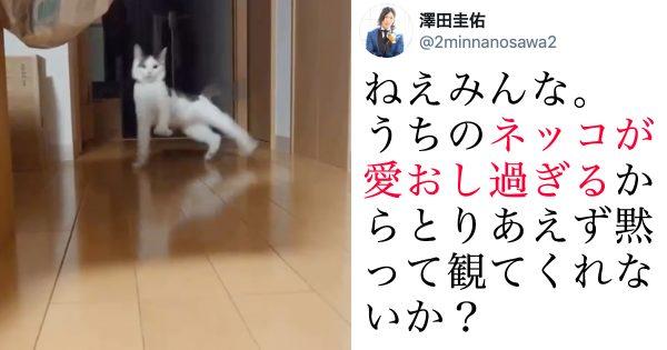 「2秒間」にネコの愛おしさがギュッと詰まった動画が最高すぎるw