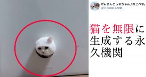 【ユーモア】飼い主「猫を無限に生成するアイテムができたぞー!」