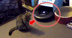 ルンバがネコに特攻…3秒後の「完璧なディフェンス」に吹いたw