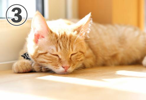 猫 愛くるしい 心理テスト