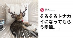 猫が「シャッターチャンスを理解してる」という証拠写真 8選