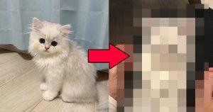 「クリリンのことニャー!?」超サイヤ猫が50万人をざわつかせた…