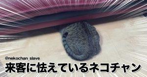 猫の「アタマ隠して尻隠さず」がキュートすぎて白目むいた 8選
