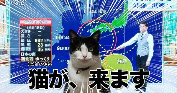 猫がテレビの前にいると、奇跡が起こる 10選