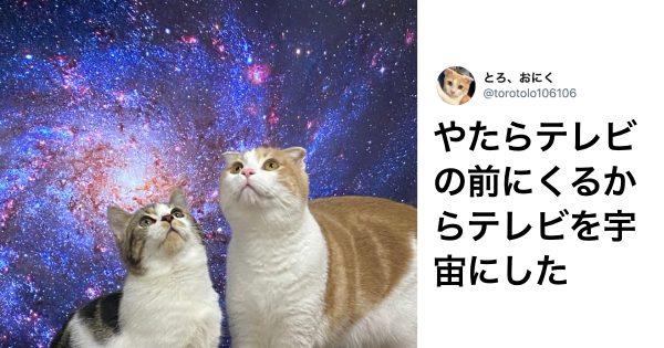 「猫 × 秀逸なアイデア」で革命が起きた 8選