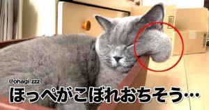 「猫ってもしかして、飲める…?」 10選